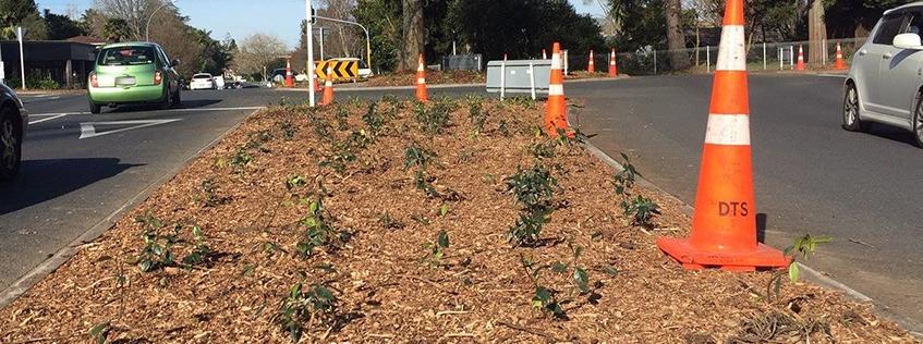 Road side gardening | Hamilton City Council