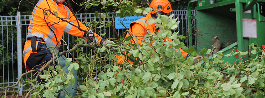 Tree management by our City's arborists