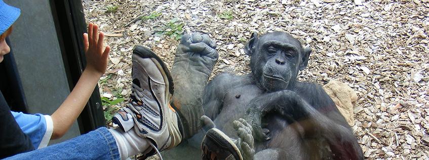 Just chillin' at the Hamilton Zoo