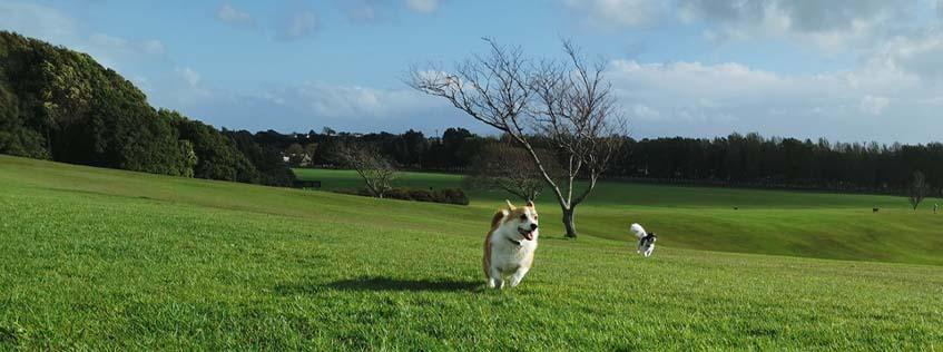 dogs running in park