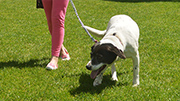 Dog owners urged to be cautious in Minogue Park