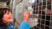 Baby chimpanzee charms city leaders